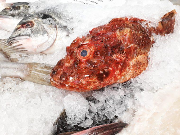 Konečně pořádný Fish House + recept na grilovaného mečouna